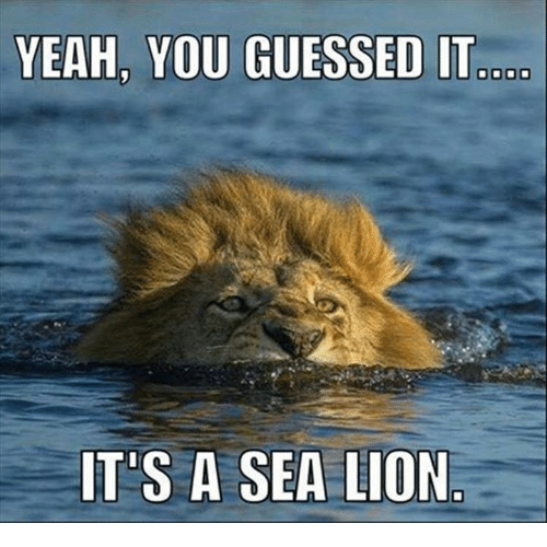 yeah you guessed it its a sea lion 9949420 ✅ 25 best memes about lions lions memes,Lions Meme