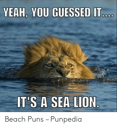 YEAH YOU GUESSED IT IT'S a SEA LION Beach Puns – Punpedia | Puns