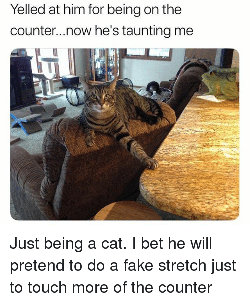 Fake, Funny, and I Bet: Yelled at him for being on the  counter...now he's taunting me Just being a cat. I bet he will pretend to do a fake stretch just to touch more of the counter