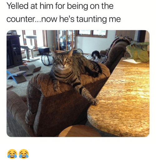 Memes, 🤖, and Him: Yelled at him for being on the  counter...now he's taunting me 😂😂