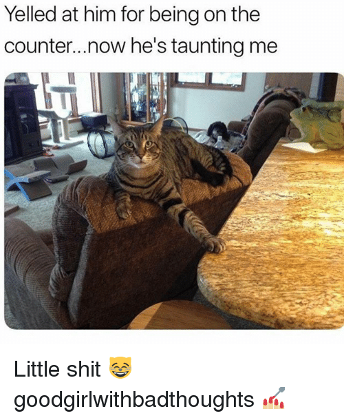Memes, Shit, and 🤖: Yelled at him for being on the  counter...now he's taunting me Little shit 😸 goodgirlwithbadthoughts 💅🏼