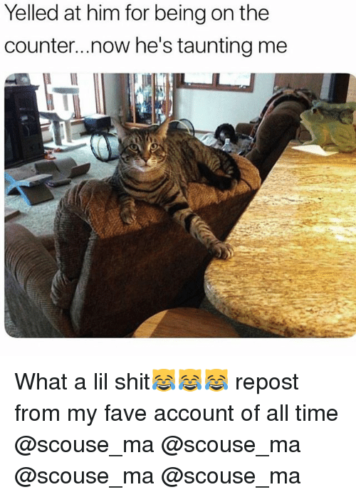 Funny, Shit, and Fave: Yelled at him for being on the  counter..now he's taunting mee What a lil shit😹😹😹 repost from my fave account of all time @scouse_ma @scouse_ma @scouse_ma @scouse_ma