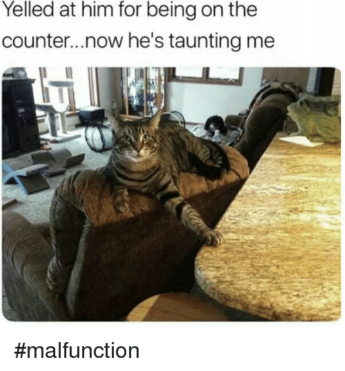 Memes, 🤖, and Him: Yelled at him for being on the  counter...now he's taunting me #malfunction