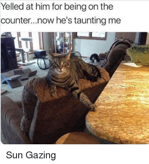 Memes, 🤖, and Sun: Yelled at him for being on the  counter...now he's taunting me Sun Gazing