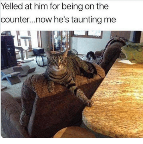 Memes, 🤖, and Him: Yelled at him for being on the  counter...now he's taunting me