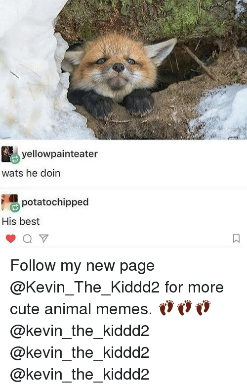 Cute, Memes, and Animal: yellow painteater  wats he doin  potatochipped  His best Follow my new page @Kevin_The_Kiddd2 for more cute animal memes. 👣👣👣 @kevin_the_kiddd2 @kevin_the_kiddd2 @kevin_the_kiddd2