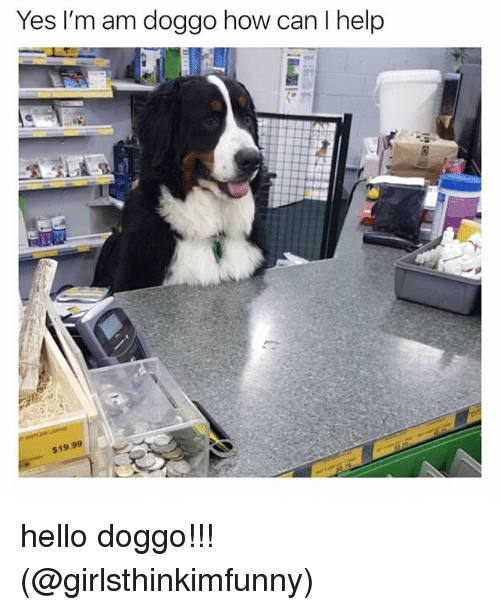 Hello, Memes, and Help: Yes I'm am doggo how can I help  $19.99 hello doggo!!! (@girlsthinkimfunny)
