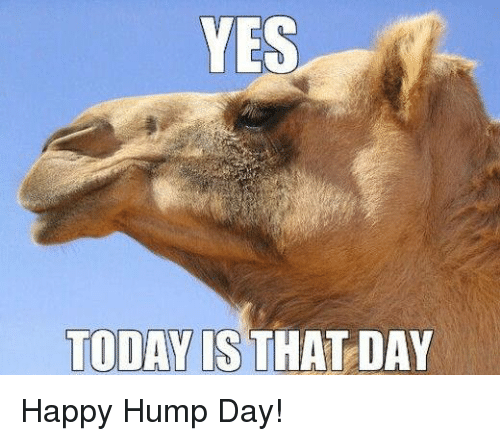 yes-today-is-that-day-happy-hump-day-109