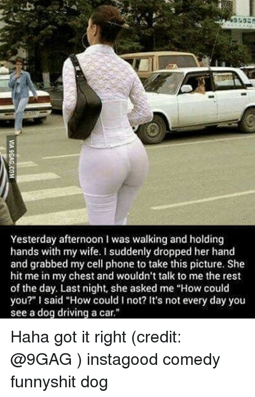 """9gag, Cars, and Memes: Yesterday afternoon I was walking and holding  hands with my wife. I suddenly dropped her hand  and grabbed my cell phone to take this picture. She  hit me in my chest and wouldn't talk to me the rest  of the day. Last night, she asked me """"How could  you?"""" l said """"How could not? It's not every day you  see a dog driving a car."""" Haha got it right (credit: @9GAG ) instagood comedy funnyshit dog"""