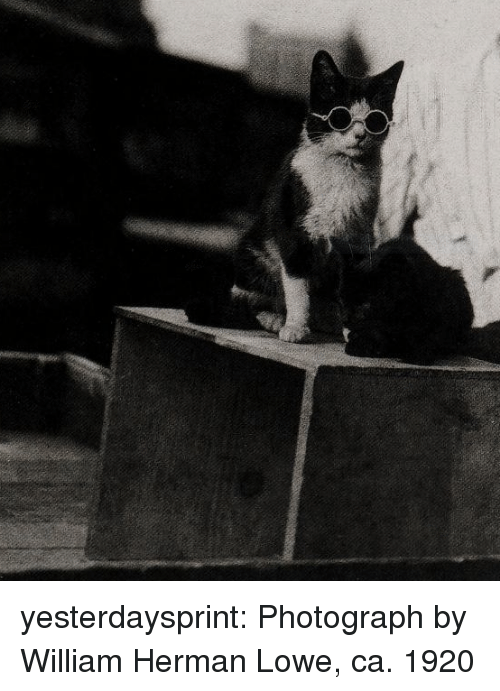 Tumblr, Blog, and Com: yesterdaysprint:  Photograph by William Herman Lowe, ca. 1920