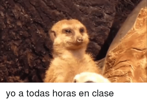 Yo and Horas: yo a todas horas en clase