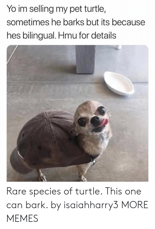 Dank, Memes, and Target: Yo im selling my pet turtle,  sometimes he barks but its because  hes bilingual. Hmu for details Rare species of turtle. This one can bark. by isaiahharry3 MORE MEMES