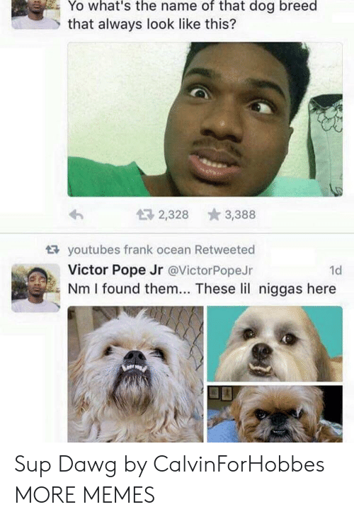 Dank, Frank Ocean, and Memes: Yo what's the name of that dog breed  that always look like this?  2,328 3,388  tR youtubes frank ocean Retweeted  Victor Pope Jr @VictorPopeJr  1d  Nm I found them... These lil niggas here Sup Dawg by CalvinForHobbes MORE MEMES