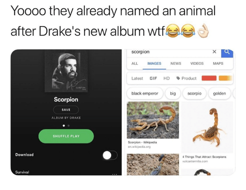 Drake, Gif, and News: Yooo0 they already named an animal  after Drake's new album wfe  scorpion  ALL IMAGES NEWS VIDEOS MAPS  Latest GIF HD、Product  black emperor bigscorpio golden  Scorpion  SAVE  ALBUM BY DRAKE  SHUFFLE PLAY  Scorpion- Wikipedia  Download  4 Things That Attract Scorpions  vulcantermite.com  Survival