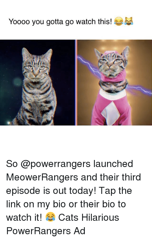 Memes, 🤖, and Powerrangers: Yoooo you gotta go watch this! So @powerrangers launched MeowerRangers and their third episode is out today! Tap the link on my bio or their bio to watch it! 😂 Cats Hilarious PowerRangers Ad