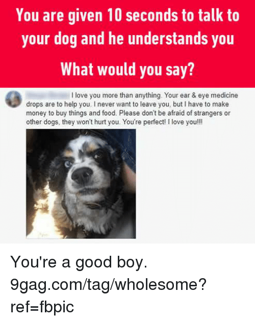 9gag, Dank, and Dogs: You are given 10 seconds to talk to  your dog and he understands you  What would you say?  I love you more than anything. Your ear & eye medicine  drops are to help you. I never want to leave you, but I have to make  money to buy things and food. Please don't be afraid of strangers or  other dogs, they won't hurt you. You're perfect! I love you!!! You're a good boy. 9gag.com/tag/wholesome?ref=fbpic