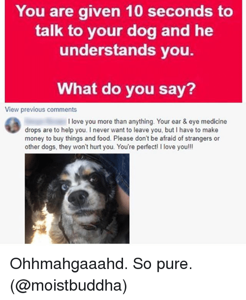 You Are Given 10 Seconds To Talk To Your Dog And He Understands You