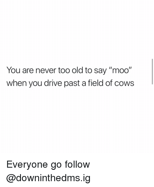 "Memes, Drive, and Old: You are never too old to say ""moo""  when you drive past a field of cows Everyone go follow @downinthedms.ig"