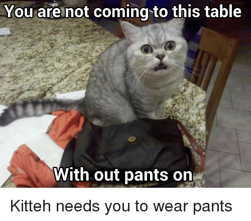 you are not coming to this table with out pants on kitteh needs you