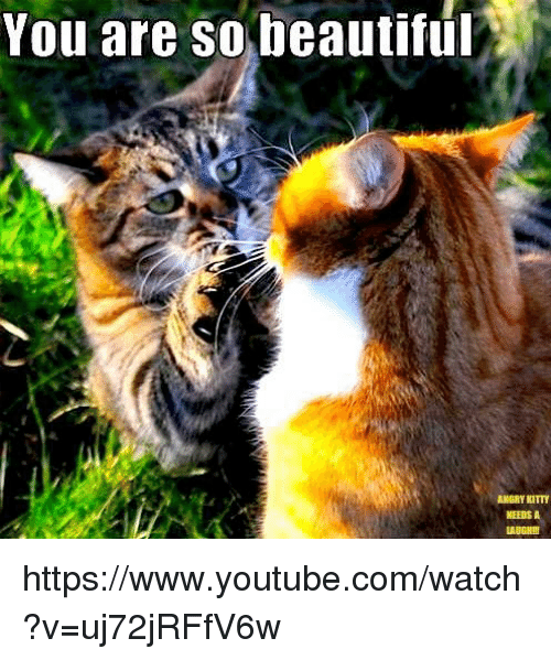 Memes, 🤖, and  You Are So Beautiful: You are SO beautiful  ANGRY KITTY  NEEDS A https://www.youtube.com/watch?v=uj72jRFfV6w