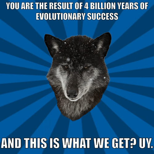 Success, Billion, and You: YOU ARE THE RESULT OF 4 BILLION VEARS OF  EVOLUTIONARY SUCCESS  AND THIS IS WHAT WE GET? UY