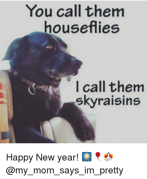 You Call Them Houseflies I Call Them Sky Raisins Happy New Year ...