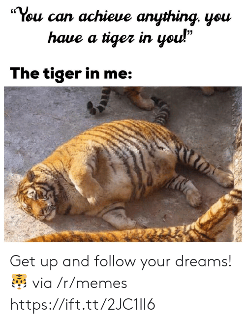 "Memes, Tiger, and Dreams: ""You can achieue anything. yeu  (C  haue a tiger irn  The tiger in me Get up and follow your dreams! 🐯 via /r/memes https://ift.tt/2JC1II6"