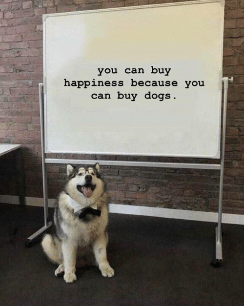 Dogs, Happiness, and Can: you can buy  happiness because you  can buy dogs.