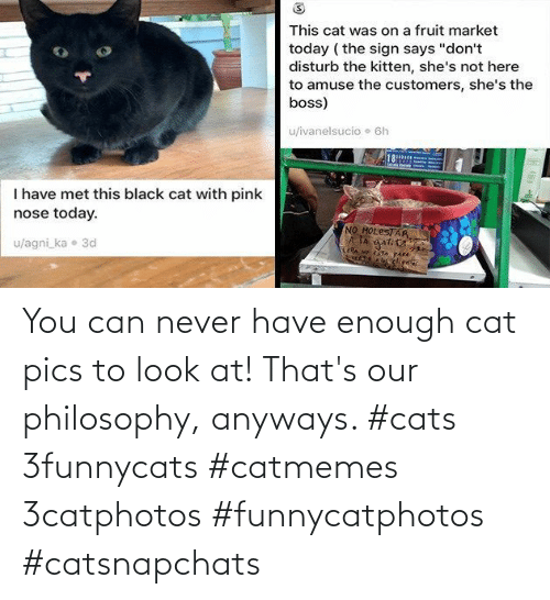 Cats, Philosophy, and Never: You can never have enough cat pics to look at! That's our philosophy, anyways. #cats 3funnycats #catmemes 3catphotos #funnycatphotos #catsnapchats