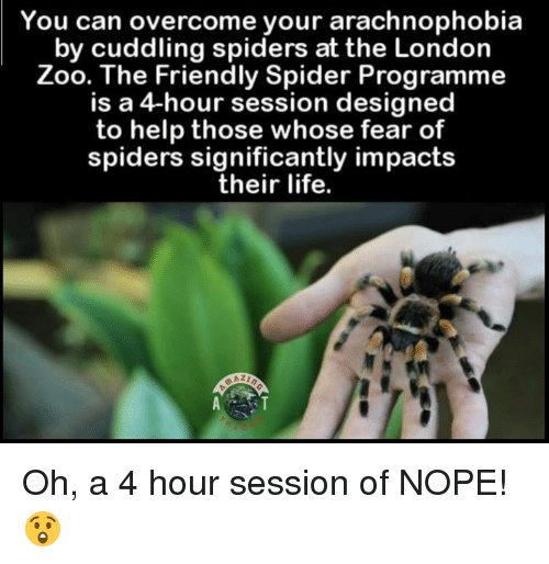 you can overcome your arachnophobia by cuddling spiders at the 4575604 25 best fear of spiders memes noping memes, cuddle spider memes