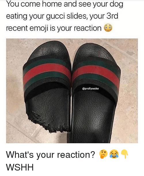 Emoji, Gucci, and Memes: You come home and see your dog  eating your gucci slides, your 3rd  recent emoji is your reaction s  @prollywoke What's your reaction? 🤔😂👇 WSHH