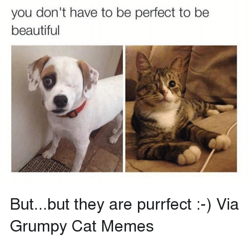you dont have to be perfect to be beautiful but but 6290207 ✅ 25 best memes about grumpy cat meme grumpy cat memes,Meme Grumpy Cat