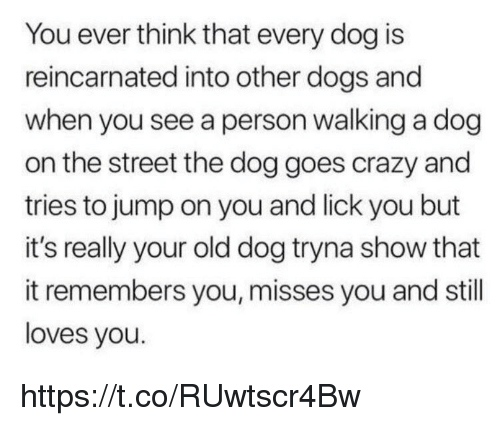 Crazy, Dogs, and Memes: You ever think that every dog is  reincarnated into other dogs and  when you see a person walking a dog  on the street the dog goes crazy and  tries to jump on you and lick you but  it's really your old dog tryna show that  it remembers you, misses you and still  loves you. https://t.co/RUwtscr4Bw