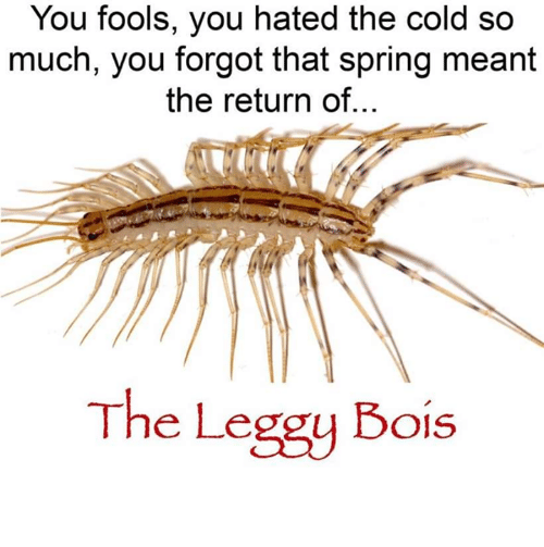 Dank, Spring, and Cold: You fools, you hated the cold so  much, you forgot that spring meant  the return of...  The Leggy Bois 𝓣𝓗𝓔 𝓛𝓔𝓖𝓖𝓨 𝓑𝓞𝓘𝓢