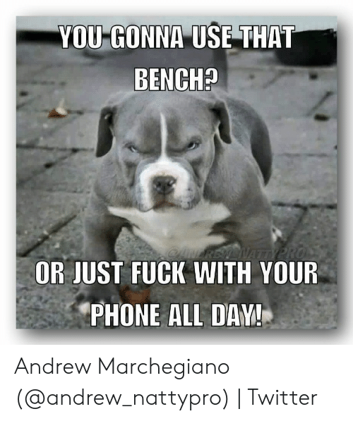 Phone, Twitter, and Fuck: YOU GONNA USE THAT  BENCH?  OANEREN NATTY PRO  OR JUST FUCK WITH YOUR  PHONE ALL DAY! Andrew Marchegiano (@andrew_nattypro) | Twitter