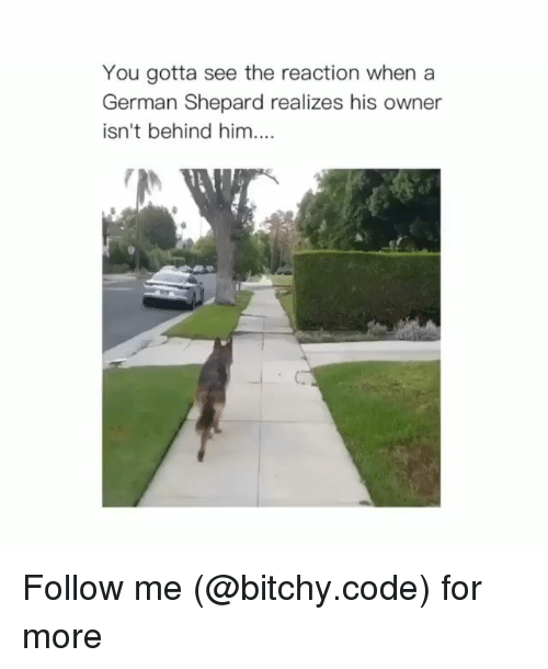 Memes, 🤖, and Code: You gotta see the reaction when a  German Shepard realizes his owner  isn't behind him. Follow me (@bitchy.code) for more