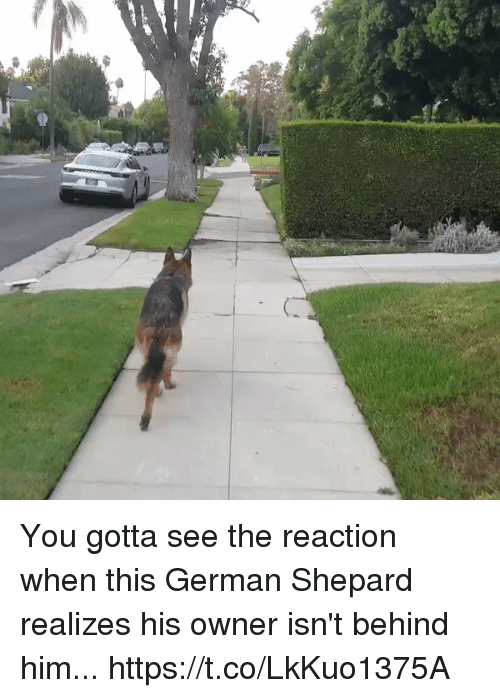 Relatable, Him, and German: You gotta see the reaction when this German Shepard realizes his owner isn't behind him... https://t.co/LkKuo1375A
