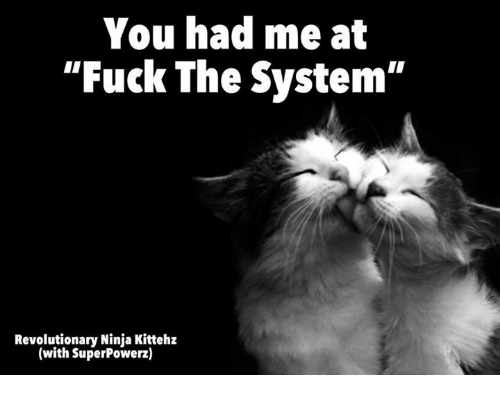 "Memes, Fuck, and Ninja: You had me at  ""Fuck The System""  Revolutionary Ninja Kittehz  (with SuperPowerz)"