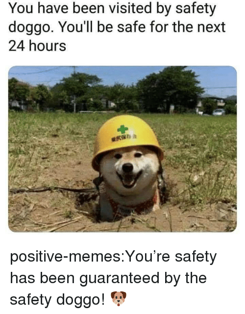 Memes, Tumblr, and Blog: You have been visited by safety  doggo. You'll be safe for the next  24 hours positive-memes:You're safety has been guaranteed by the safety doggo! 🐶