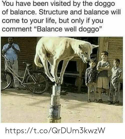 """Life, Memes, and Been: You have been visited by the doggo  of balance. Structure and balance will  come to your life, but only if you  comment """"Balance well doggo""""  35 https://t.co/QrDUm3kwzW"""