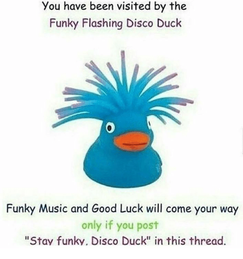 "Music, Duck, and Good: You have been visited by the  Funky Flashing Disco Duck  0  Funky Music and Good Luck will come your way  only if you post  ""Stav funky. Disco Duck"" in this thread."