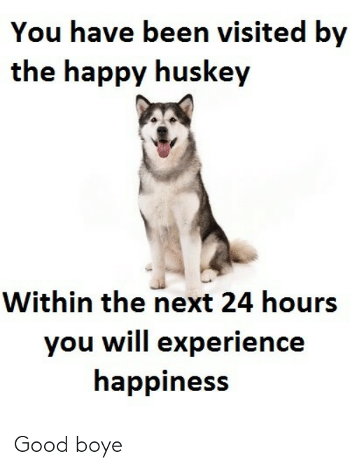 Good, Happy, and Experience: You have been visited by  the happy huskey  Within the next 24 hours  you will experience  happiness Good boye
