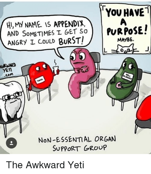 Awkward Yeti, Memes, and Awkward: YOU HAVE  HUMY NAME iS APPENDIX,  AND SoMETIMES L GET SoPuRPoSEl  ANGRY I CoULD BURST!  MAYBE  YET  .com  NoN-L9SEATIAL G  NoN-ESSENTAL ORGAN  SUPPORTGROUP The Awkward Yeti