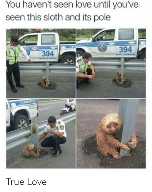 Love, True, and Sloth: You haven't seen love until you've  seen this sloth and its pole  TR  394  394  NARAE  TRANSITO True Love