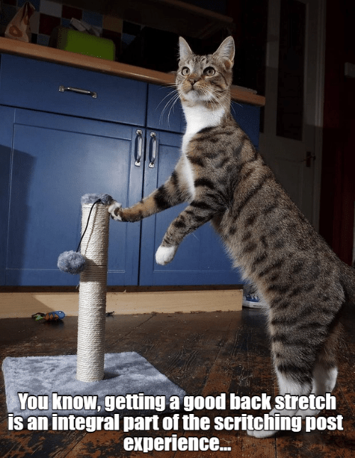 Good, Experience, and Back: You know, getting a good back stretch  is an integral part of the scritching post  experience...
