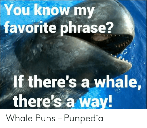 You Know My Favorite Phrase? If There's a Whale There's a