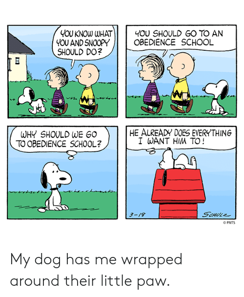 Memes, School, and Obedience: YOU KNOW WHAT  YOU ANDSNOOPY  SHOULD DO?  I 40U SHOULD GO TO AN  OBEDIENCE SCHOOL  1づ  HE ALREADY DOES EVERYTHING  WHY SHOULD WE GO  TO OBEDIENCE SCHOOL?  I WANT HIM TO!  3-/8  PNTS My dog has me wrapped around their little paw.