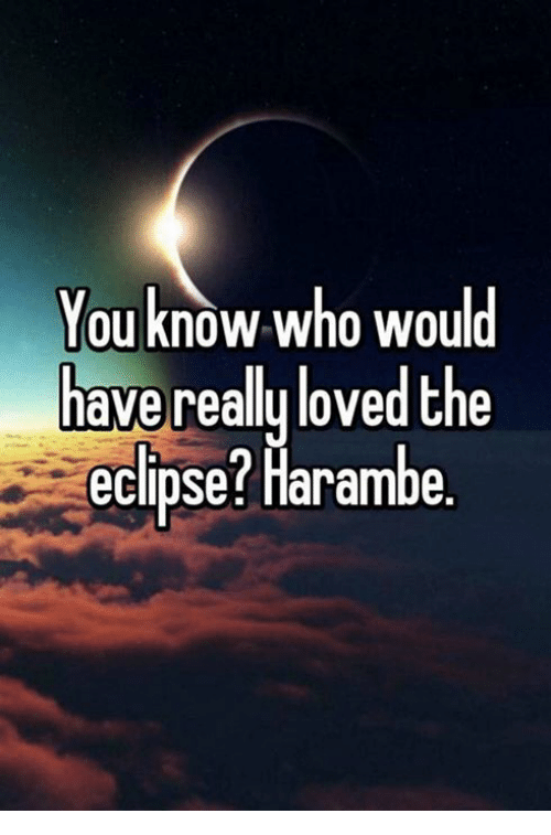 Eclipse, Harambe, and Who: You know who would  have reallu loved the  eclipse? Harambe
