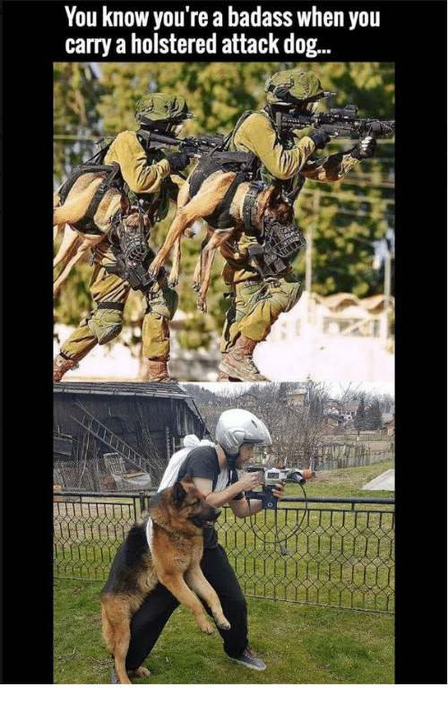 You Know You Re A Badass When You Carry A Holstered Attack Dog Irl