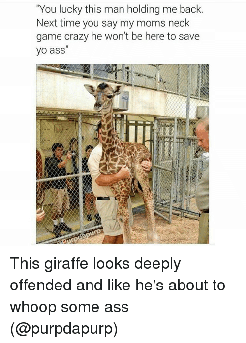 """Ass, Crazy, and Funny: """"You lucky this man holding me back.  Next time you say my moms neck  game crazy he won't be here to save  yo ass This giraffe looks deeply offended and like he's about to whoop some ass (@purpdapurp)"""